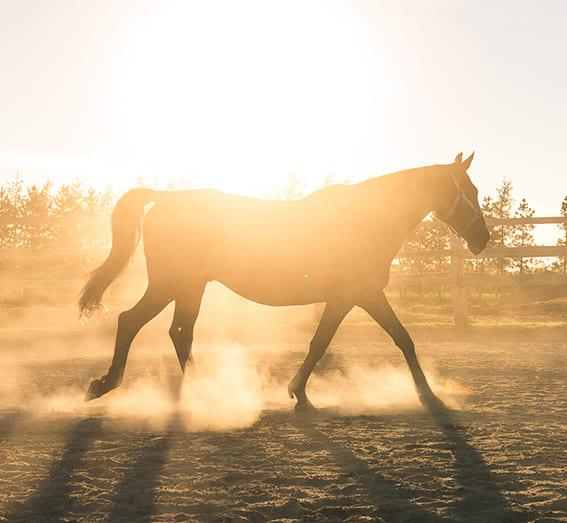 Conférence en ligne - La peur à cheval